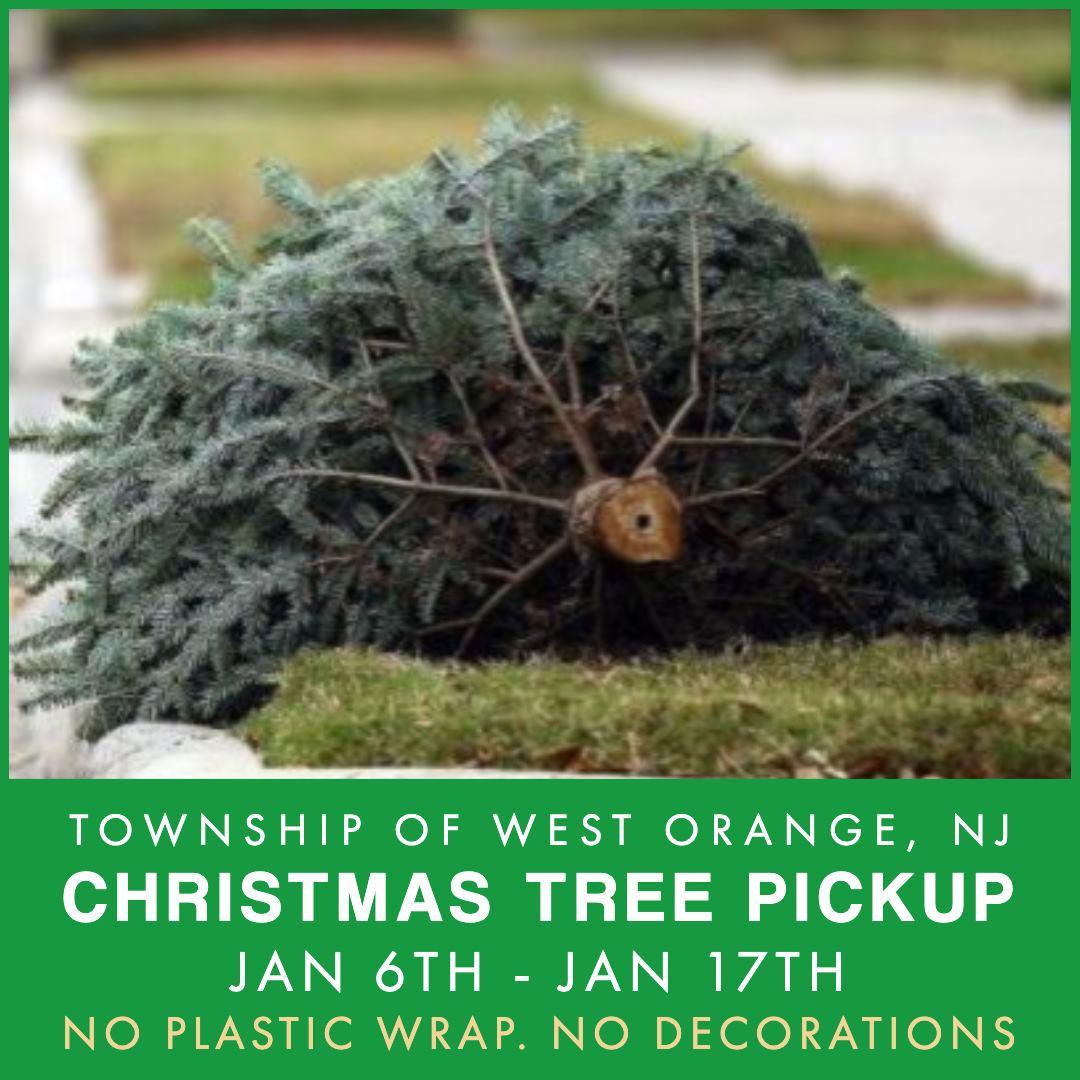 Tree pickup 2020