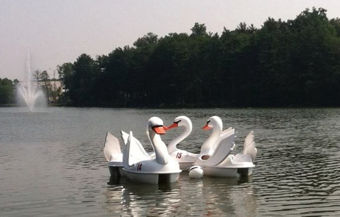 Swan shaped paddle boats